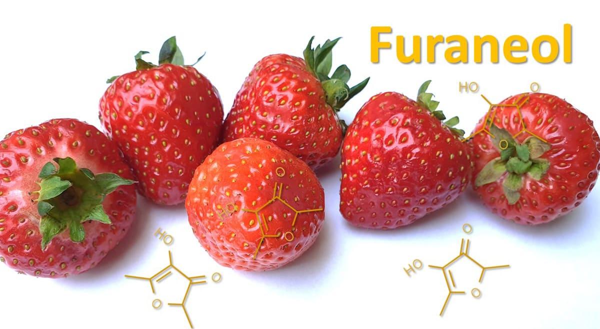 Furaneol Erdbeere - Leibniz-Instituts für Lebensmittel-Systembiologie